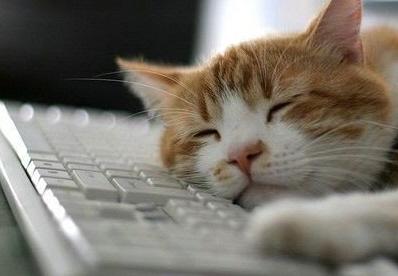 gato_internet