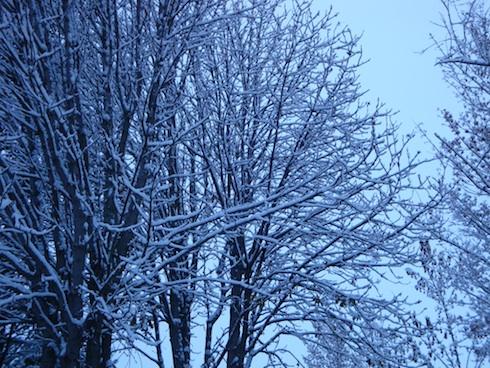 nieve-3