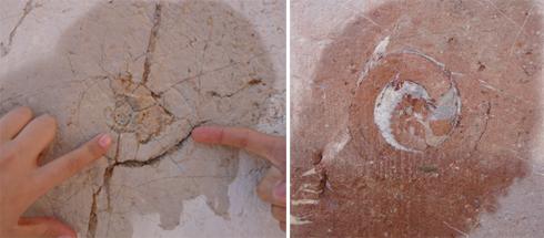 fosil-1