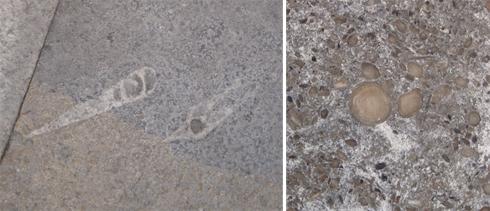 fosil-3
